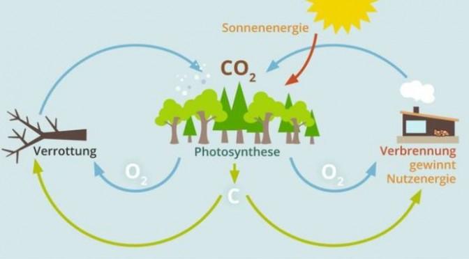 Gute Wärme wächst nach – www.wärmeausholz.at – Good heat energy is growing in the forest